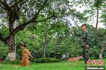 """武警军犬训导员:我的战友叫""""凯特"""""""